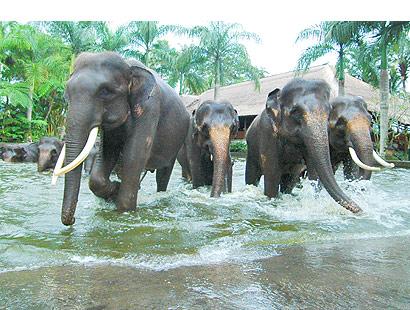 The Bali Times, Elephant Safari Park