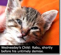 kitty-rabu1.jpg
