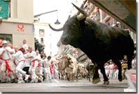 travel-bull.jpg