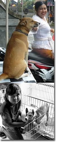 instinct-doggi.jpg