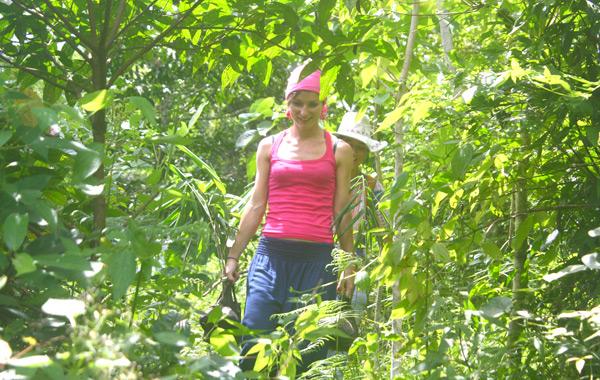 Bamboo-planting