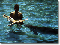 Dolphin Assisted Therapy (DAT)